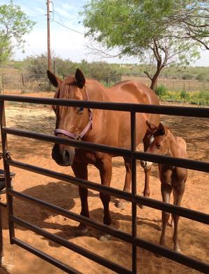 foal328