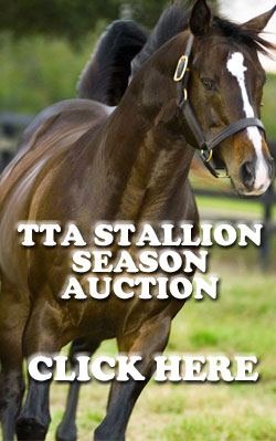 TTA Stallion Season Auction
